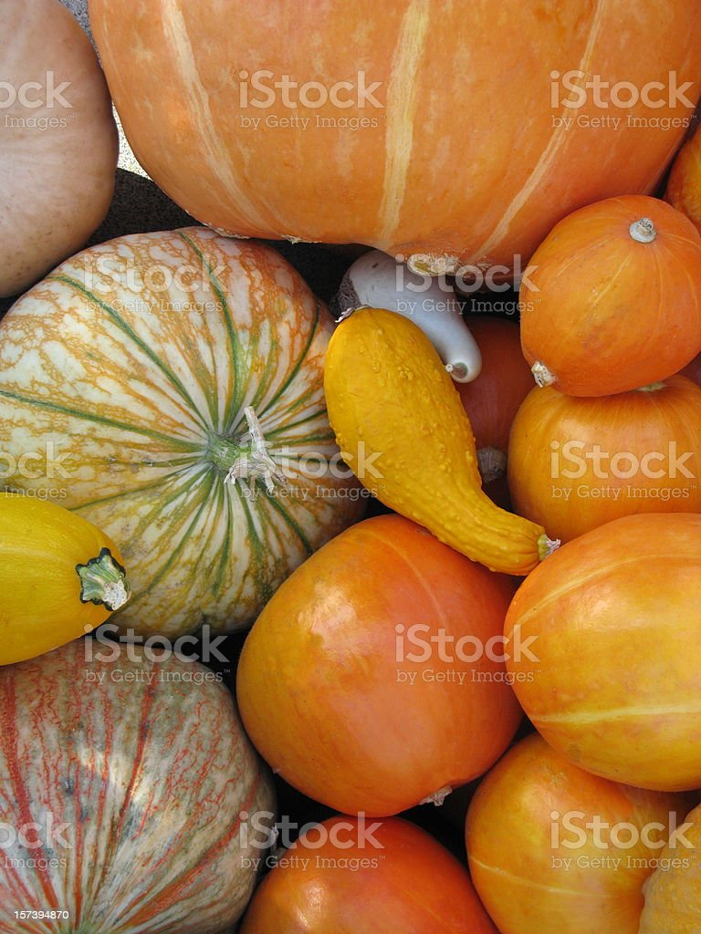 Gourds Pumpkin Bunch Group Vegetable royalty-free stock photo
