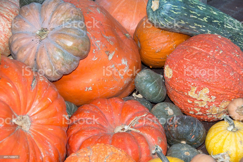 Gourds, pumpkins and squash stock photo