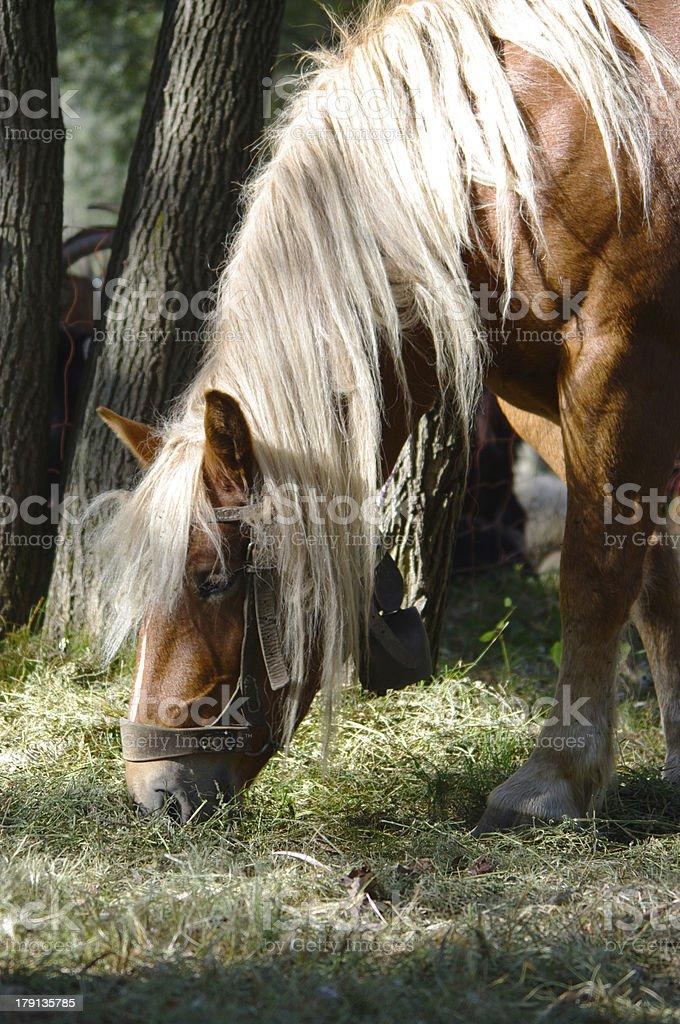 Graceful horse royalty-free stock photo