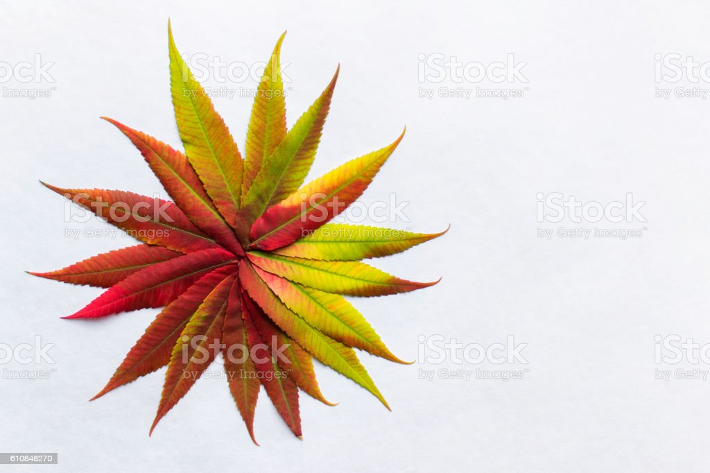 Gradient colored leaves arranged as flower stock photo