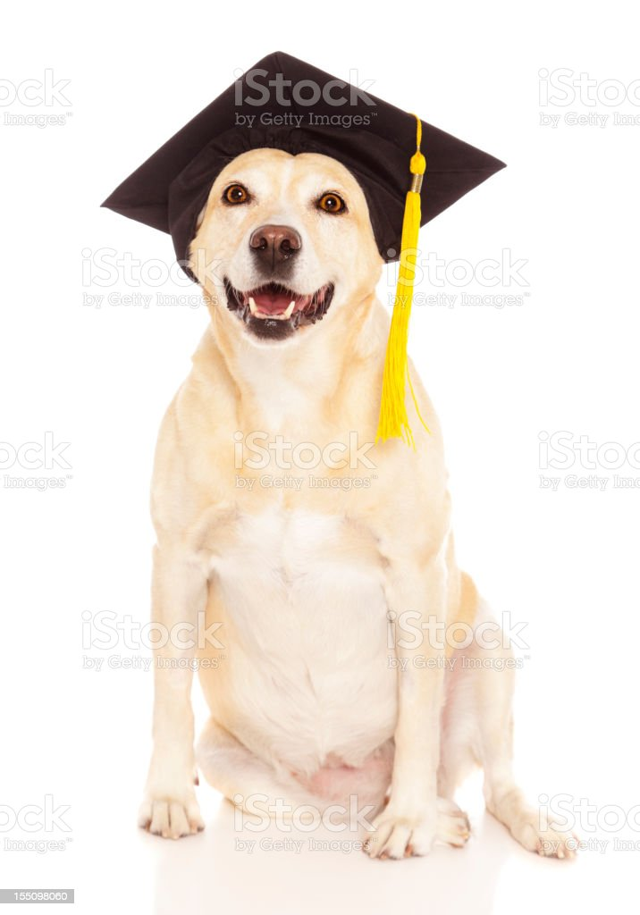 Graduate Dog stock photo