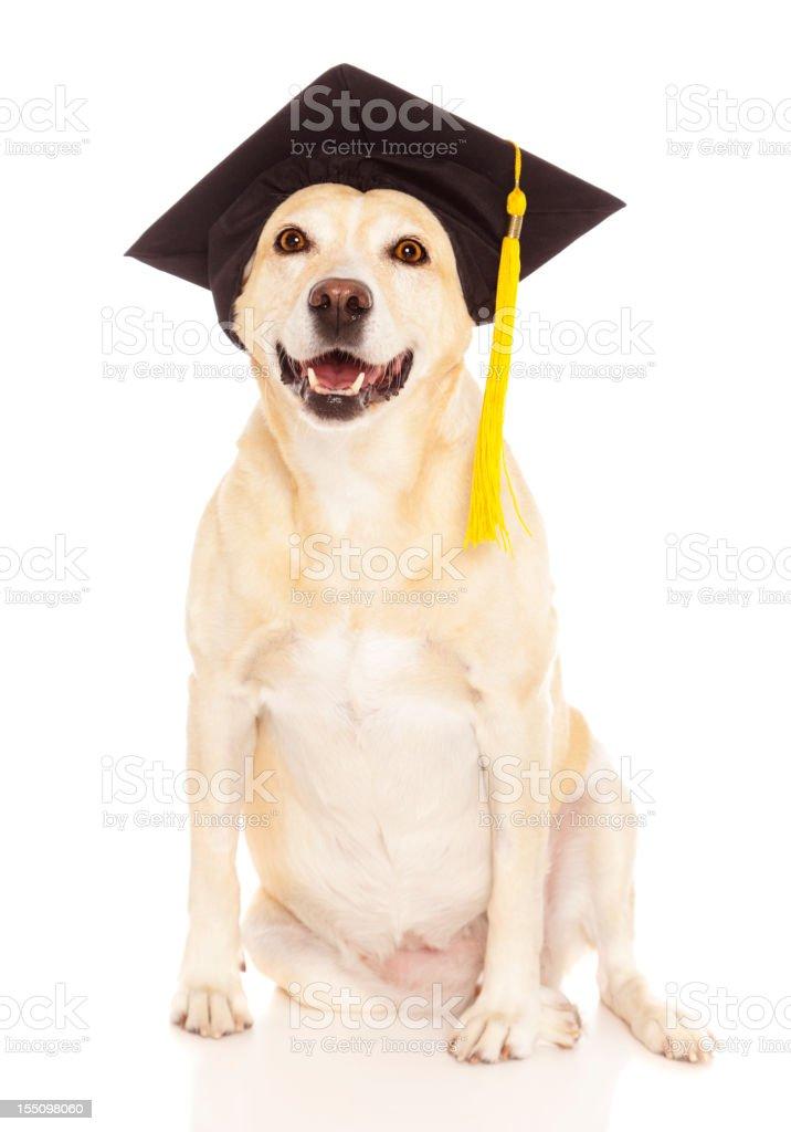 Graduate Dog stock photo