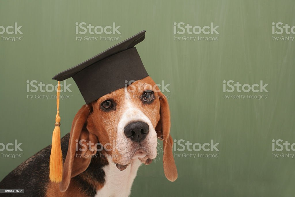 Graduated Dog stock photo