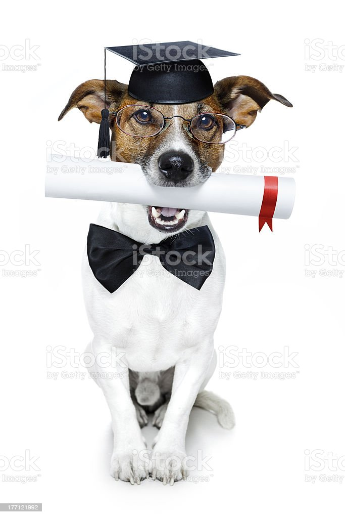 graduated dog with diploma stock photo