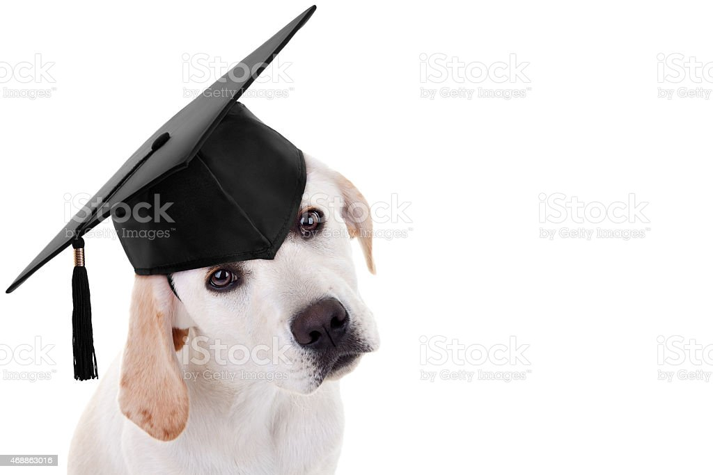 Graduation Graduate Dog stock photo