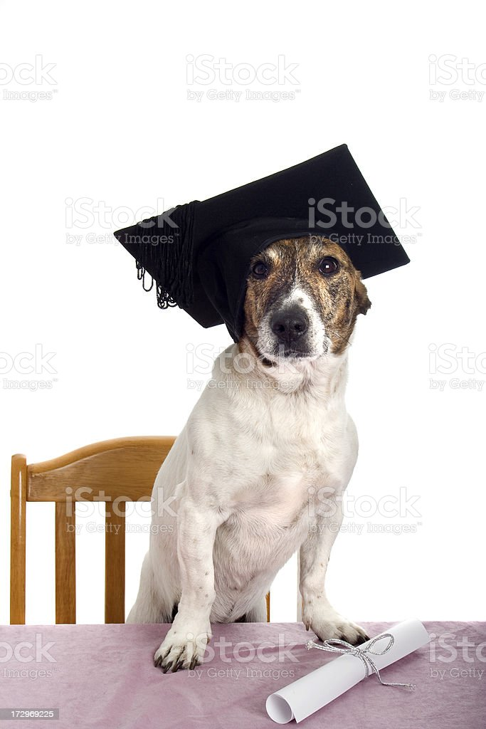 Graduation Puppy royalty-free stock photo
