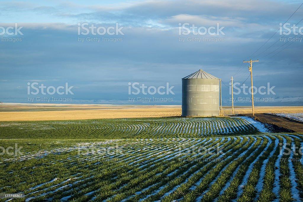 Grain bin, winter wheat fields stock photo