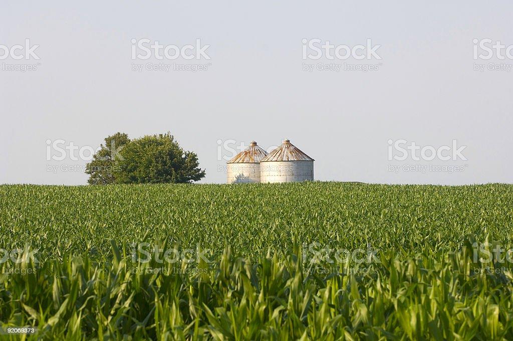 Grain bins, cornfield and blue sky stock photo