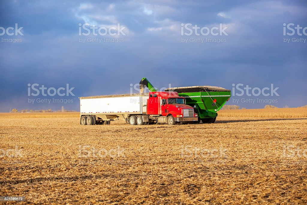 Grain Cart Filling Semi Truck With Soybeans stock photo