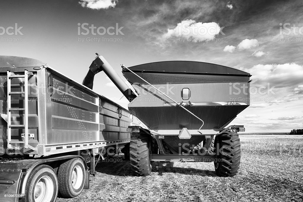Grain cart unloading canola into truck trailer stock photo