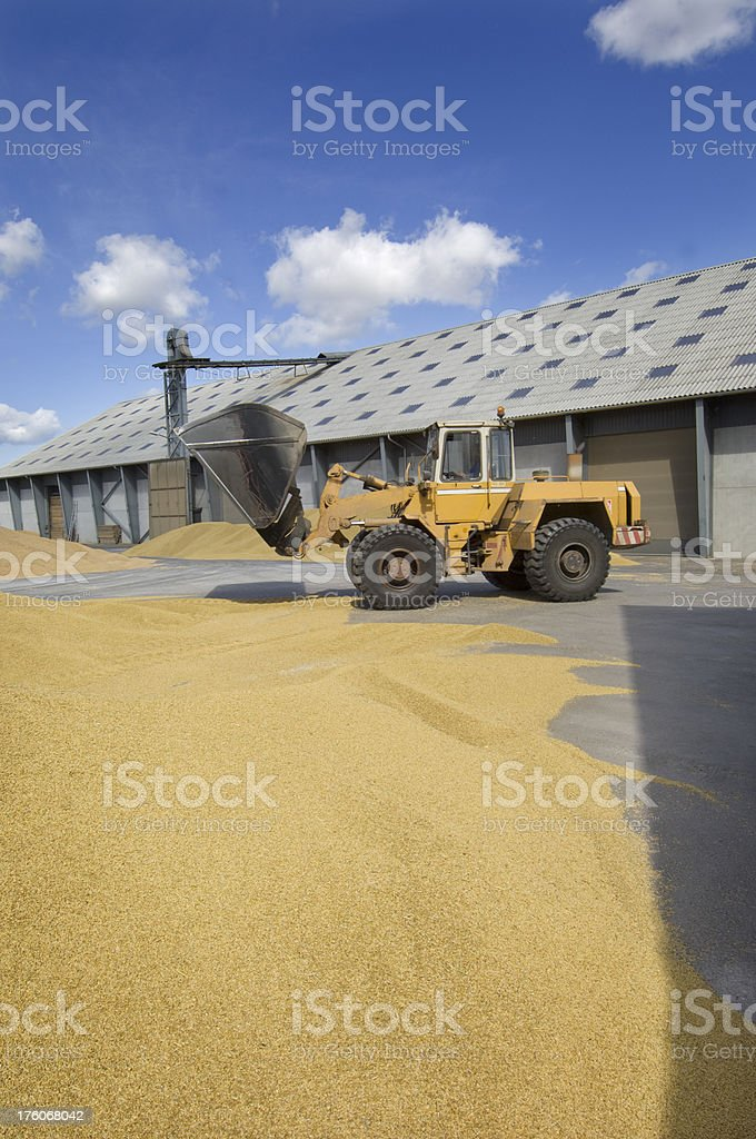 Grain Depot at Harvest Time stock photo