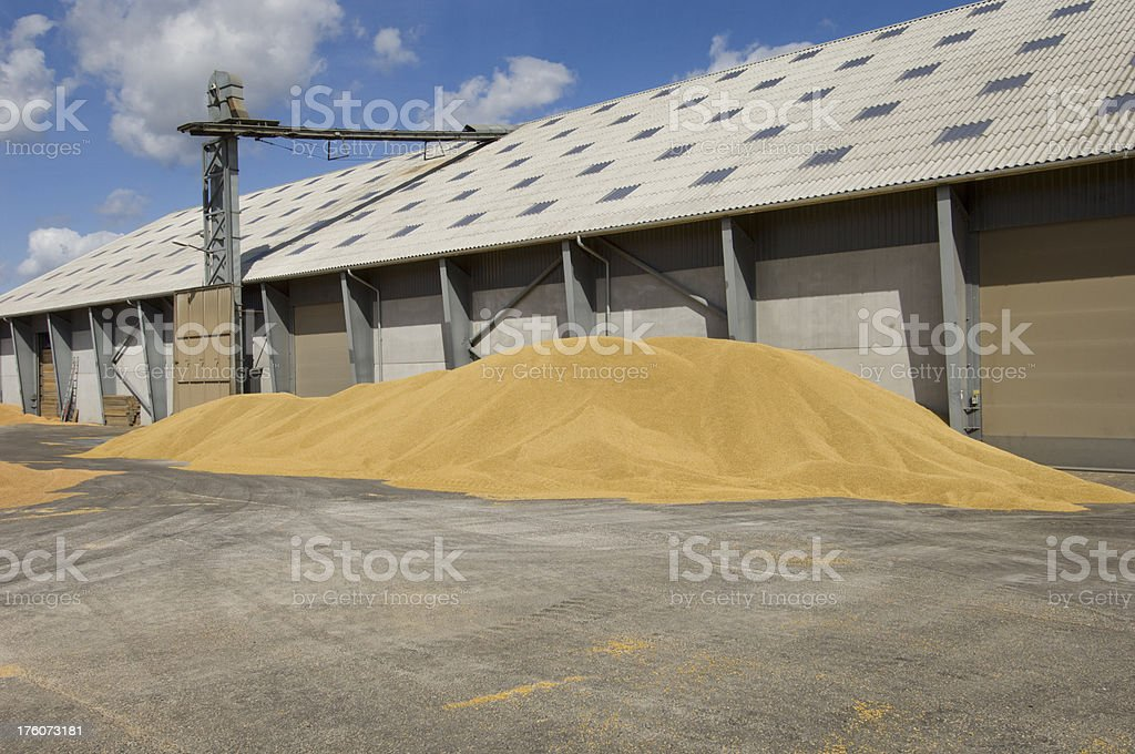 Grain Depot at Harvest Time royalty-free stock photo