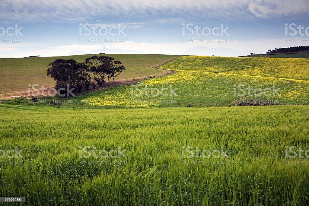 Grain Farm Landscape stock photo