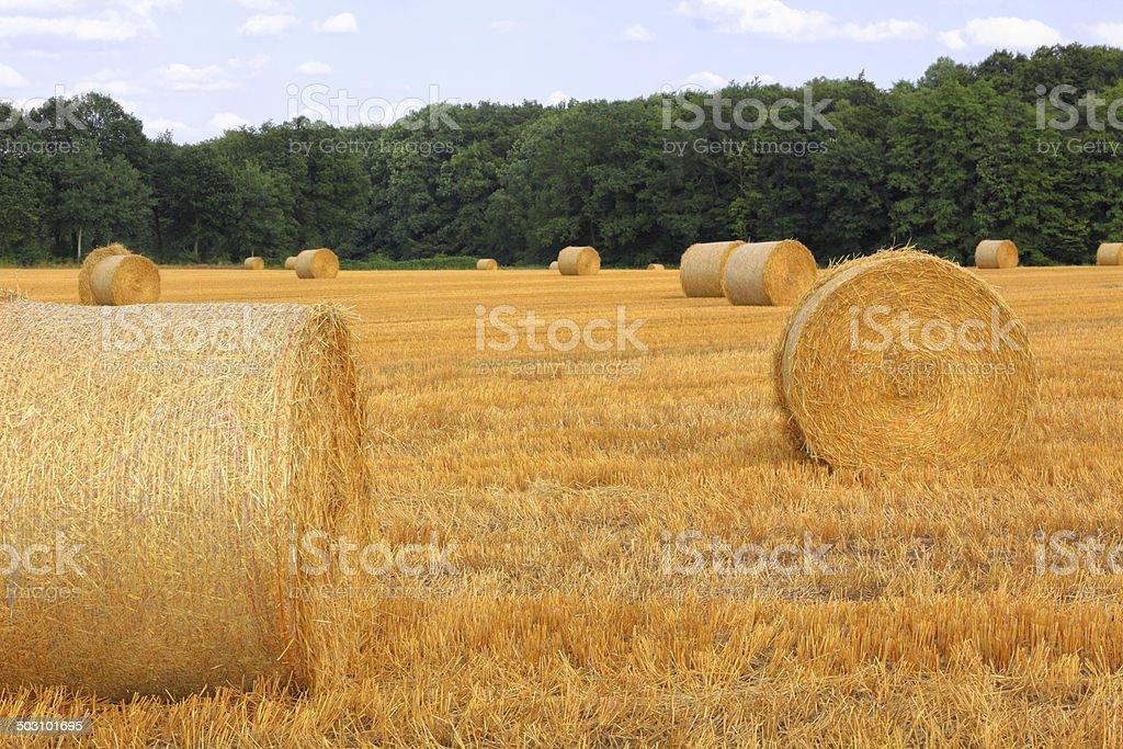 Grain harvest stock photo