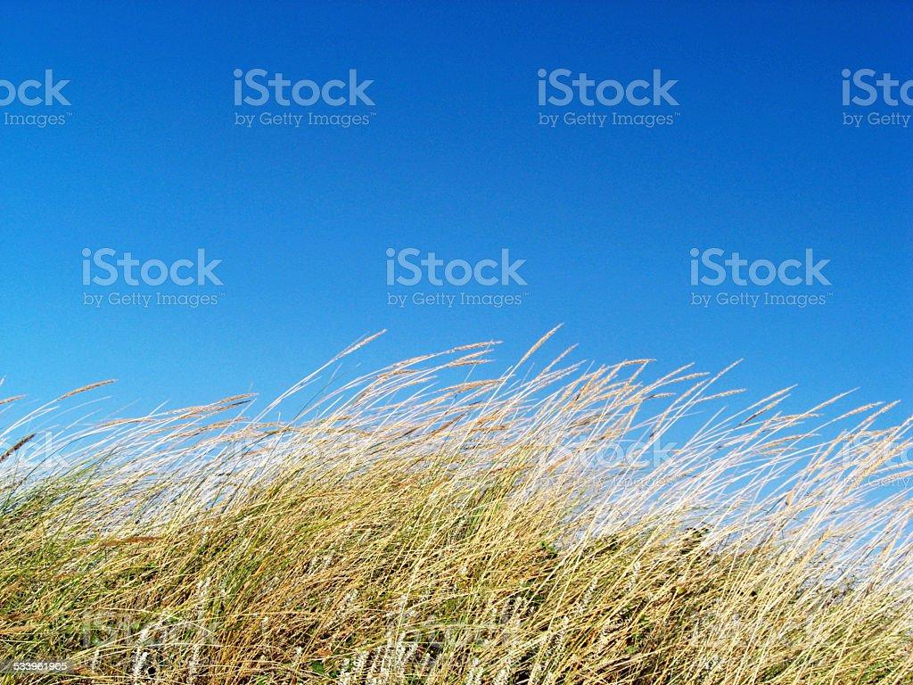 Grão de vento com céu azul foto de stock royalty-free