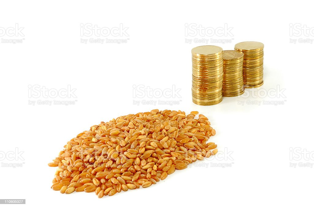 grain of wheat and metal coins stock photo