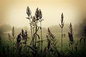 Grain on Foggy Morning