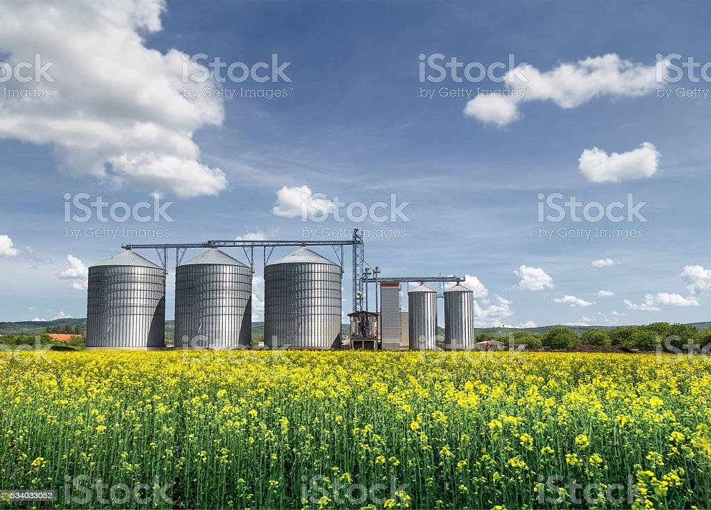 Grain silo and rape field stock photo
