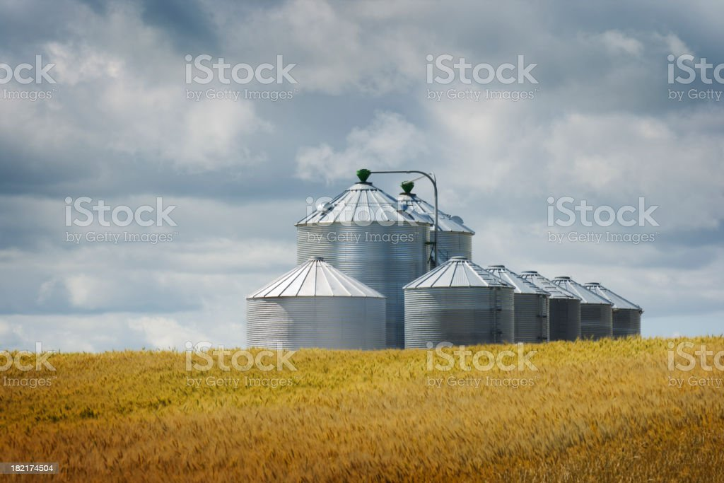 Grain Silos by Wheat Field in Agricultural Crop Harvest Landscape stock photo