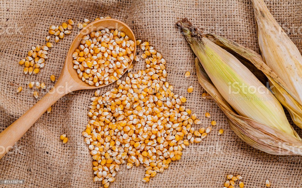 Grains of dried sweet corn in the wooden spoon stock photo
