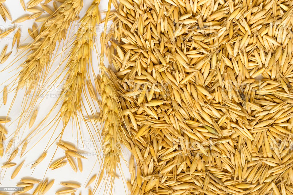 Grains of oats and wheat spikelets stock photo