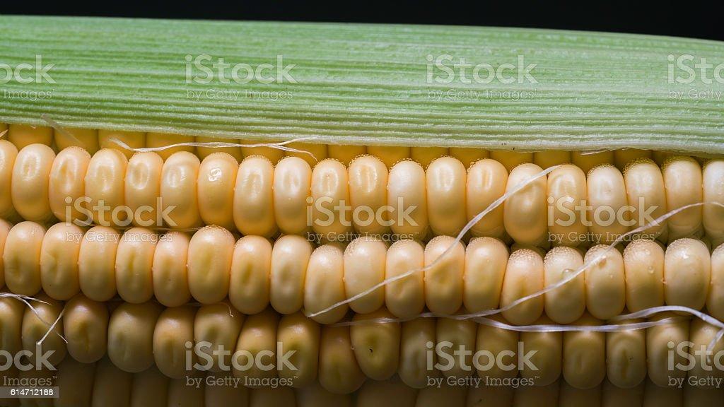 Grains of ripe corn stock photo