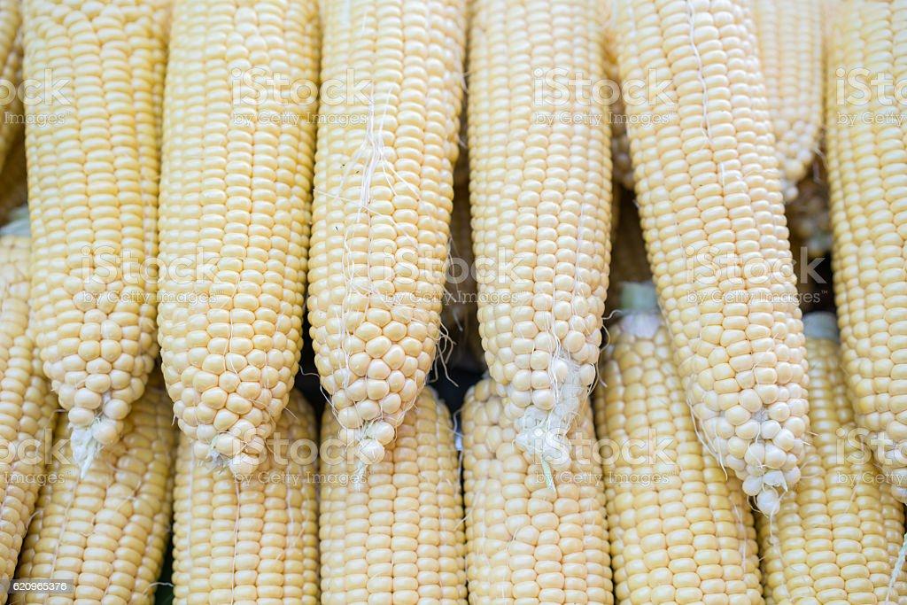 Grains of ripe corns stock photo