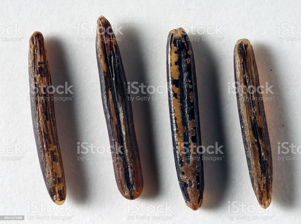 Grains of wild rice zizania palustris stock photo