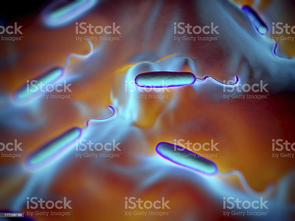Gram-negative rod-shaped bacteria stock photo