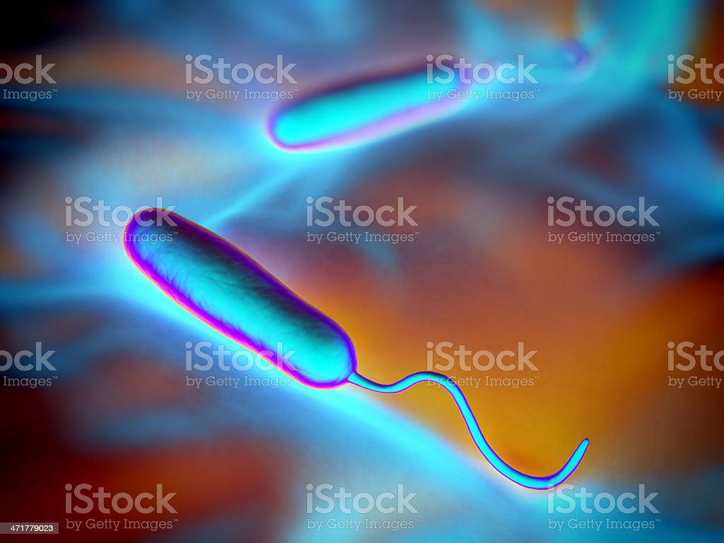 Gram-negative rod-shaped bacteria royalty-free stock photo