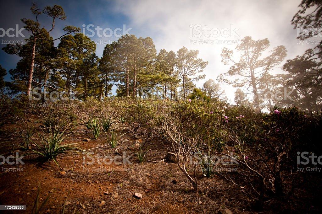 Gran Canaria royalty-free stock photo