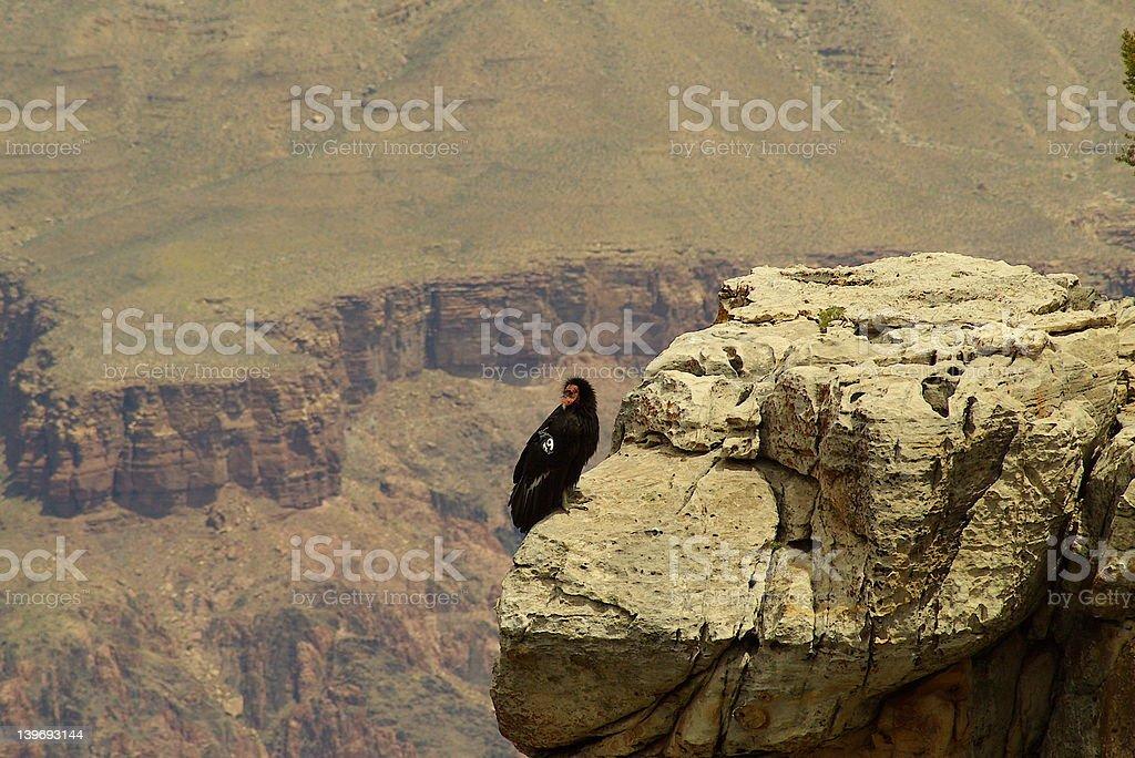 Grand Canyon Eagle stock photo