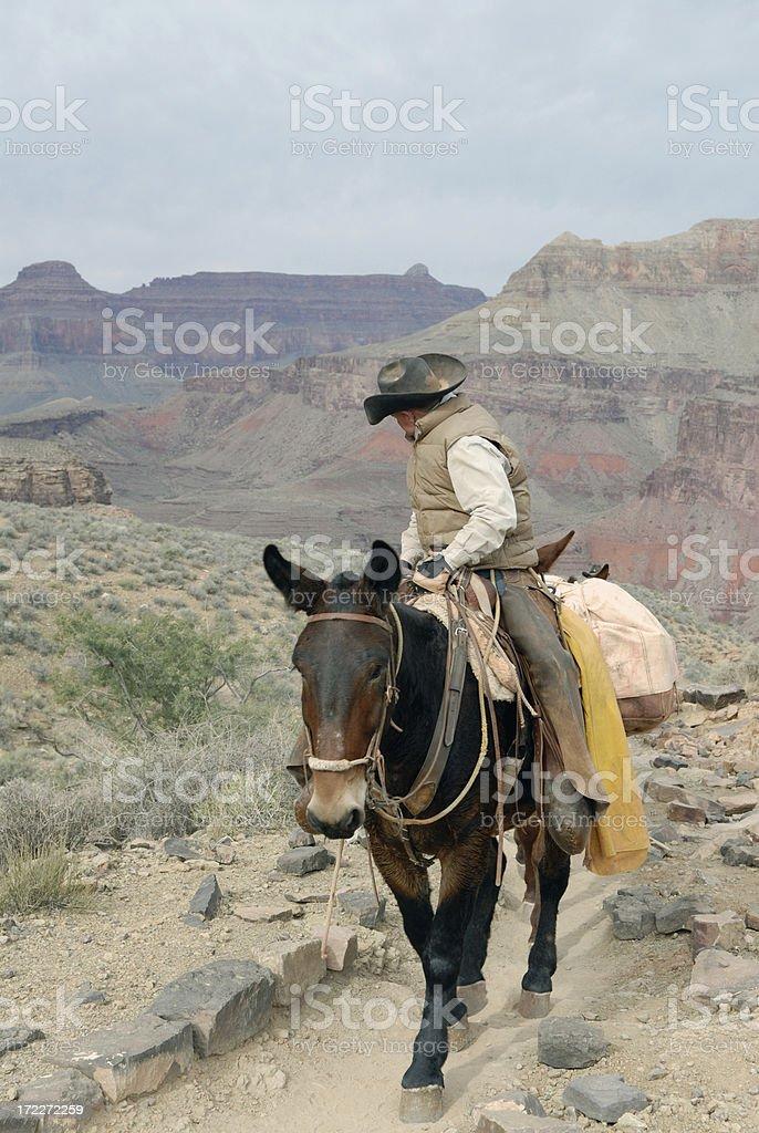 Grand Canyon Mule Packer royalty-free stock photo