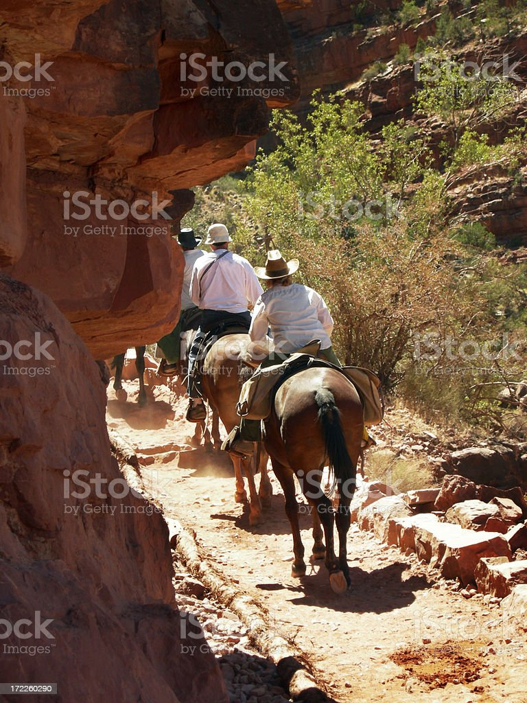 Grand Canyon - Mules royalty-free stock photo