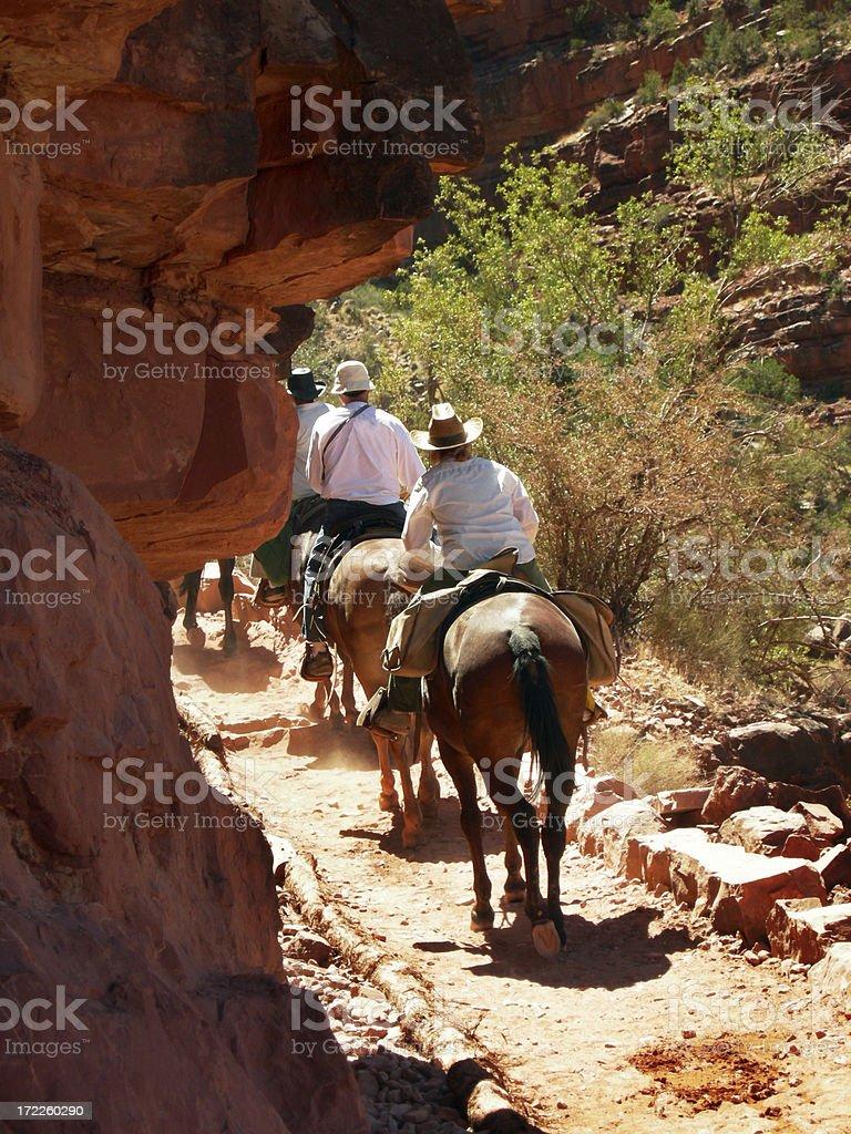 Grand Canyon - Mules stock photo