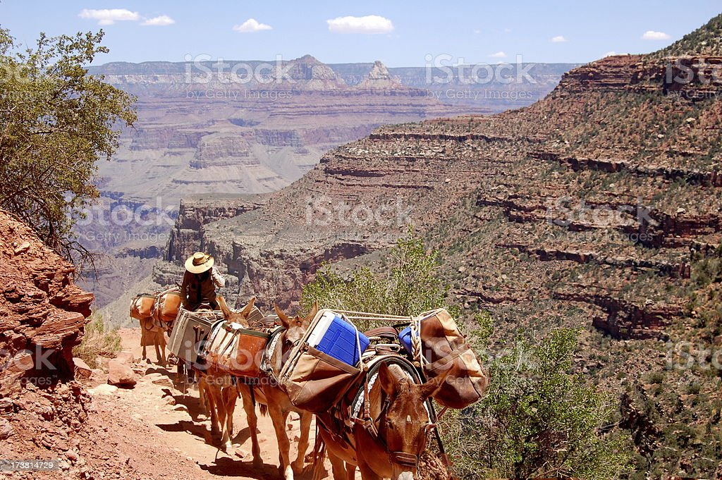 Grand Canyon Mules royalty-free stock photo