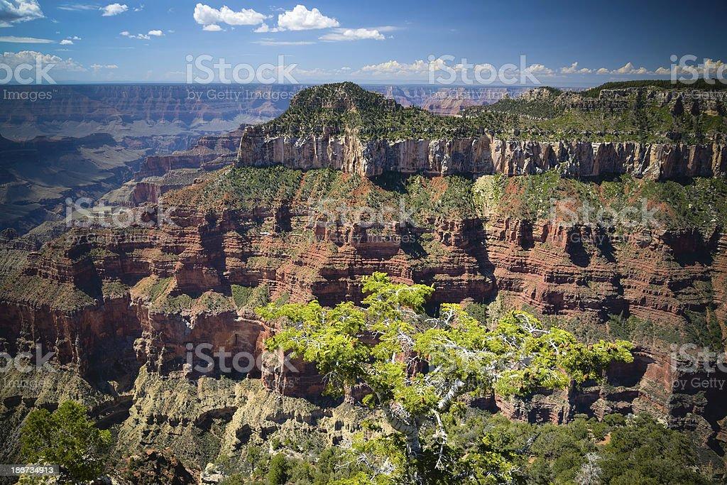 Grand Canyon, North Rim stock photo