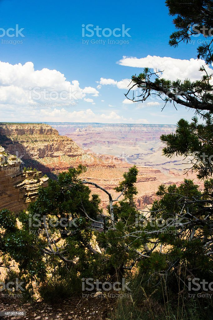 Grand canyon peeping attraverso gli alberi foto stock royalty-free