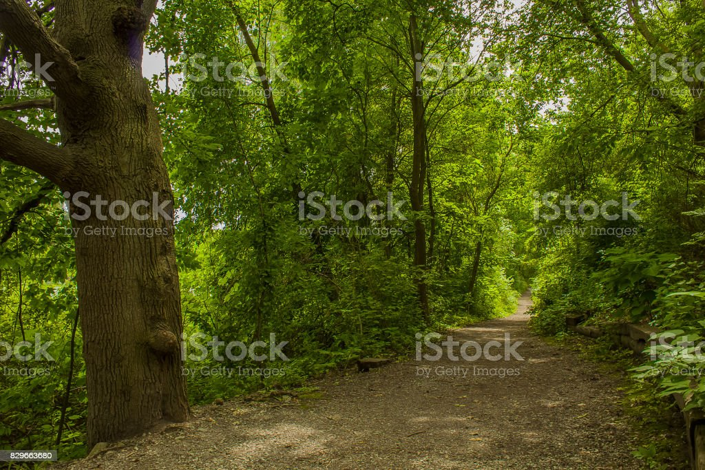 Grand Forest stock photo