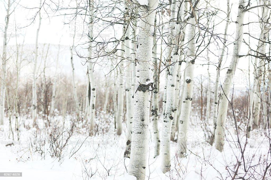 Grand Mesa Wintery Landscape Colorado stock photo