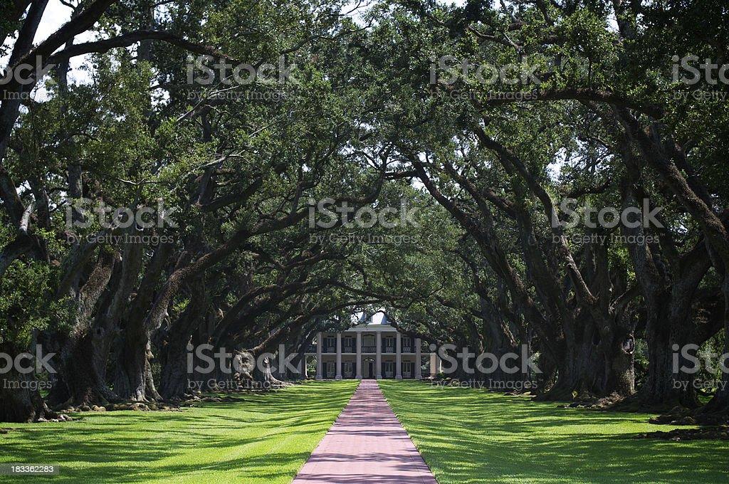 Grand Southern Plantation Entrance with Oak Trees stock photo