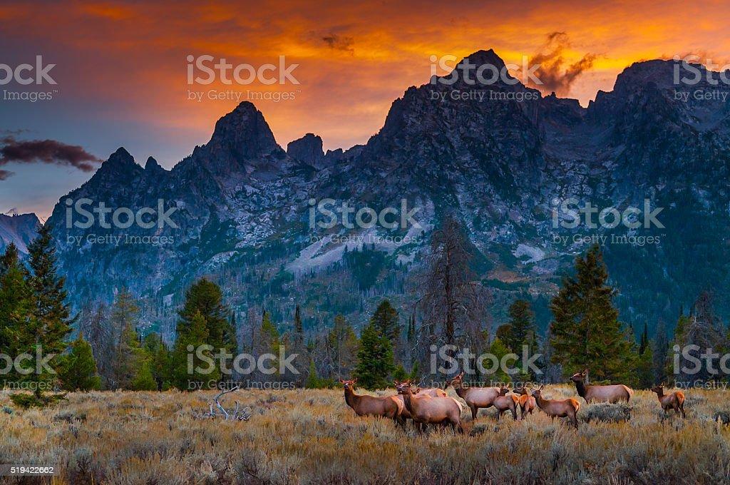 Grand Tetons Landscape stock photo
