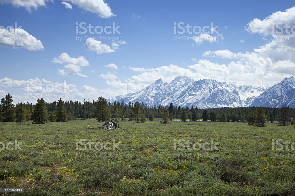 Grand Tetons mountains with meadow and pine trees royalty-free stock photo