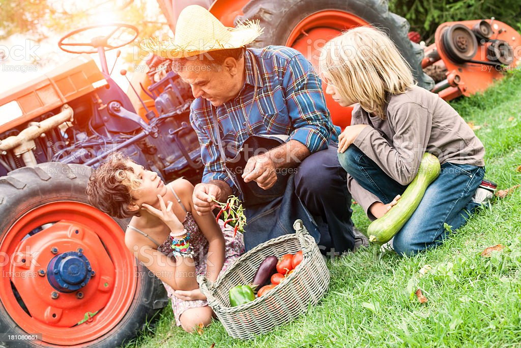 Grandfather explains to his children agricultural products royalty-free stock photo