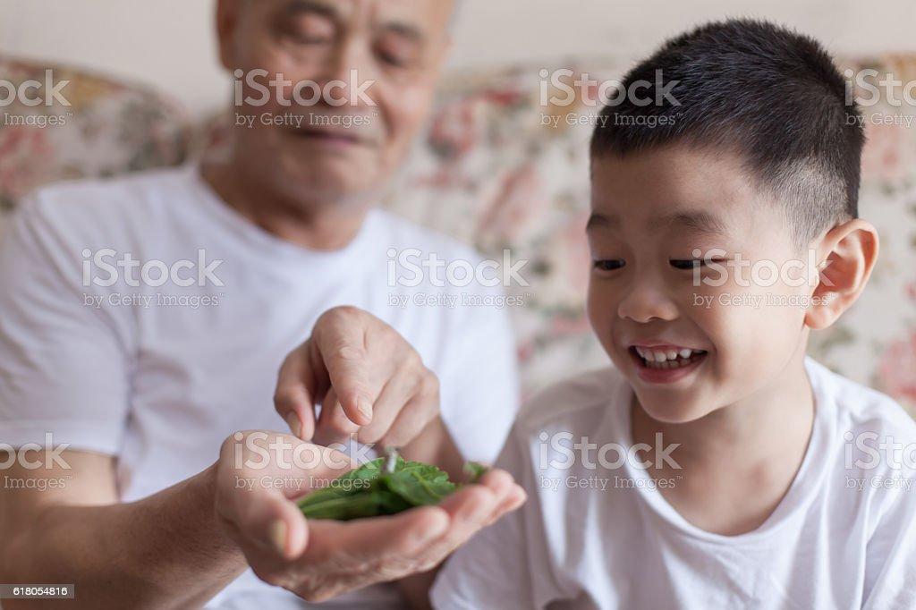 Grandfather introducing grandson to silkworm stock photo