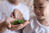 Grandfather introducing grandson to silkworm