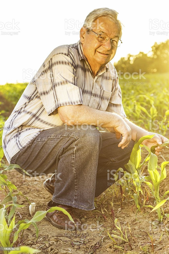 Grandfather. royalty-free stock photo