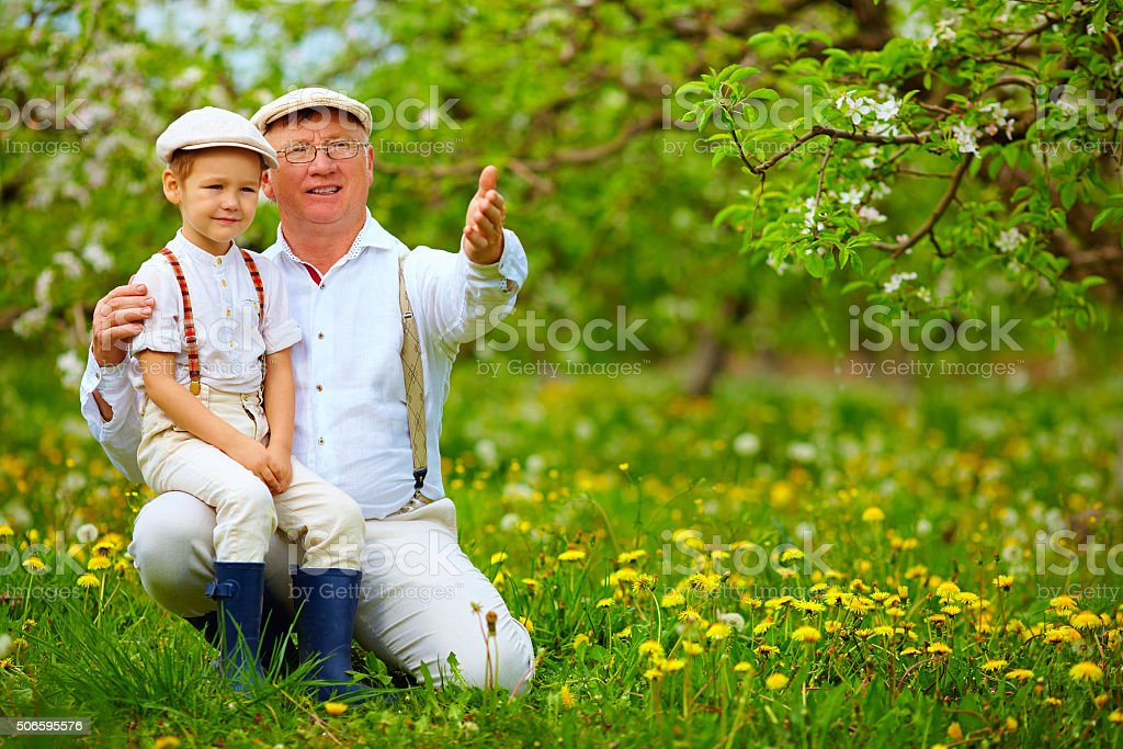 grandfather sharing experience with grandson in spring garden stock photo