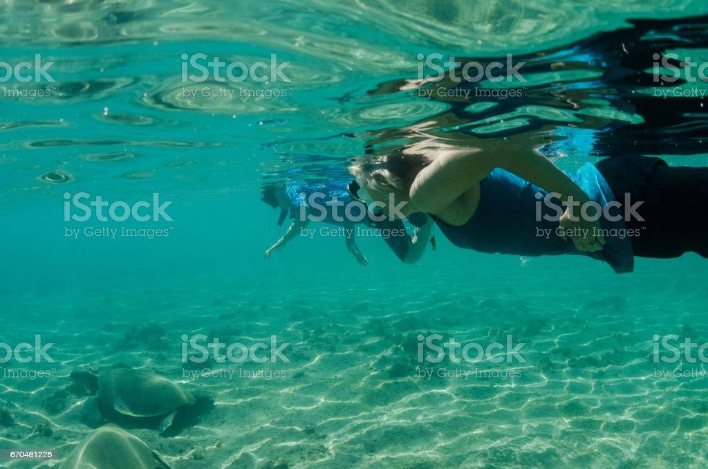 grandma and grandson swimming with sea turtles stock photo
