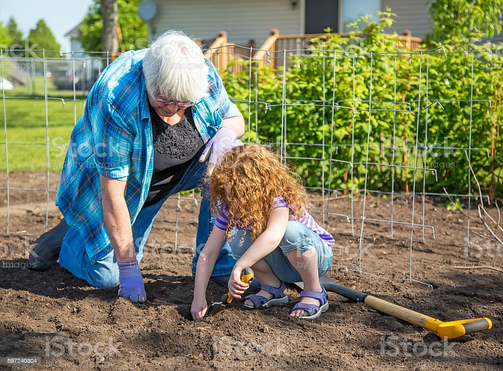 Grandma & Young Girl Planting Potatoes in Garden stock photo